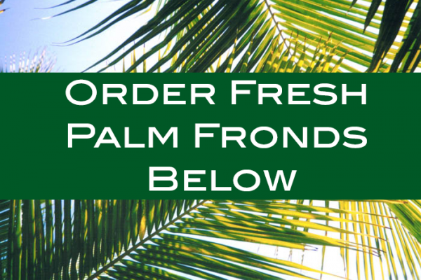 buy palm fronds